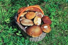 Funghi Immagini Stock Libere da Diritti