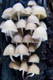 Funghi Immagini Stock