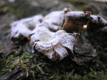 funghi Immagine Stock