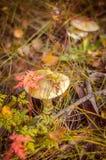 Funghi, fotografia stock