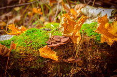 Funghi, fotografia stock libera da diritti
