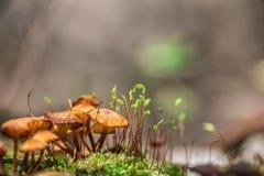 Funghi Fotografie Stock Libere da Diritti