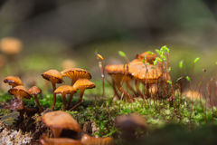 Funghi Fotografie Stock