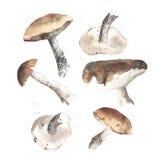 Funghi adorabili del autunm Fotografie Stock
