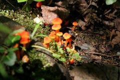 Funghi arancio sul pavimento della foresta Immagine Stock Libera da Diritti
