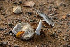 Funghi in autunno fotografia stock
