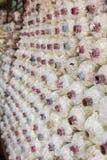 Funghi in azienda agricola Fotografie Stock