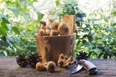 Funghi in barilotto di legno Immagini Stock Libere da Diritti