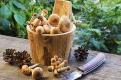 Funghi in barilotto di legno Immagini Stock