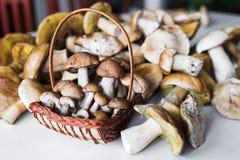 Funghi bianchi Fotografia Stock Libera da Diritti