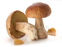 Funghi bianchi e foglie della betulla gialla Fotografia Stock Libera da Diritti