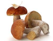 Funghi bianchi e foglie della betulla gialla Fotografia Stock
