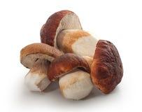 Funghi bianchi isolati Fotografia Stock Libera da Diritti