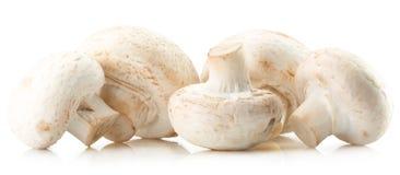 Funghi bianchi isolati sui precedenti bianchi Fotografia Stock Libera da Diritti