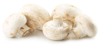 Funghi bianchi isolati sui precedenti bianchi Fotografie Stock Libere da Diritti