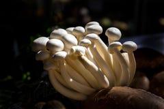funghi bianchi nel fondo scuro Fotografia Stock