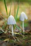 Funghi bianchi nella foresta fotografie stock libere da diritti