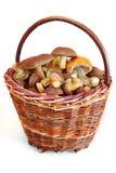 Funghi in cestino Fotografie Stock