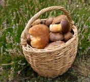Funghi in cestino Immagine Stock Libera da Diritti