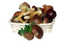 Funghi in cestino Immagini Stock Libere da Diritti