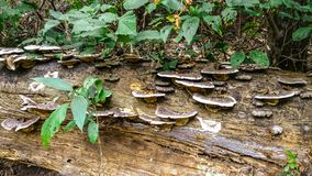 Funghi che crescono su un ceppo immagini stock