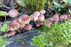 Funghi che crescono su una macro del ceppo Fotografia Stock Libera da Diritti