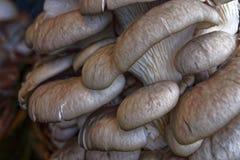 Funghi commestibili Immagine Stock Libera da Diritti