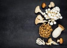 Funghi commestibili dei funghi sullo spazio della copia Immagini Stock Libere da Diritti