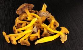 Funghi commestibili selvaggi sul fondo dell'ardesia Fotografie Stock Libere da Diritti