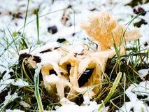 Funghi congelati in neve Fotografia Stock