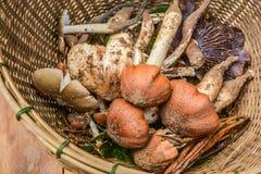 Funghi dalla foresta Immagini Stock Libere da Diritti