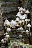 Funghi dei funghi del terreno boscoso Fotografie Stock Libere da Diritti