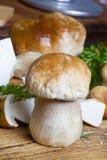 Funghi del boletus Fotografie Stock Libere da Diritti