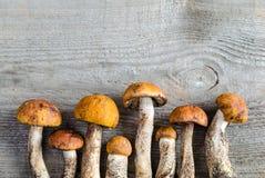 funghi del boletus del Arancio-cappuccio Immagine Stock Libera da Diritti