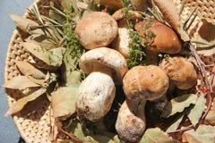 Funghi del boletus in un canestro di vimini Fotografia Stock