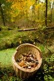 Funghi del canestro Fotografia Stock