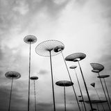 Funghi del cielo fotografia stock libera da diritti