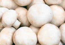 Funghi del fungo prataiolo Immagine Stock