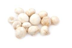 Funghi del fungo prataiolo Fotografie Stock