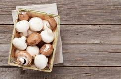 Funghi del fungo prataiolo Fotografia Stock Libera da Diritti