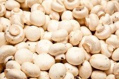 Funghi del fungo prataiolo Fotografia Stock
