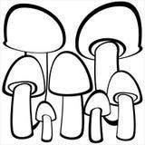 Funghi del fungo prataiolo isolati su bianco Fotografia Stock