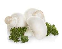 Funghi del fungo prataiolo isolati su bianco Immagini Stock Libere da Diritti