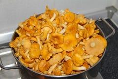 Funghi del galletto Fotografia Stock