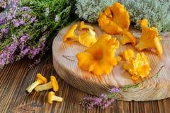 Funghi del galletto su un tagliere Fotografia Stock Libera da Diritti