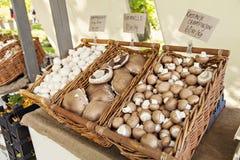 Funghi del mercato degli agricoltori Fotografia Stock