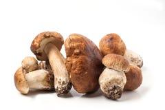 Funghi del porcino Fotografia Stock Libera da Diritti