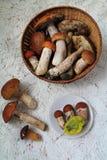 Funghi del raccolto Immagine Stock