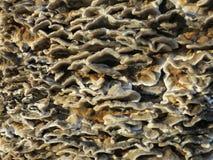 Funghi del soporte que crece en un tronco de árbol en el parque fotografía de archivo