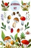 Funghi dell'acquerello messi fotografia stock libera da diritti